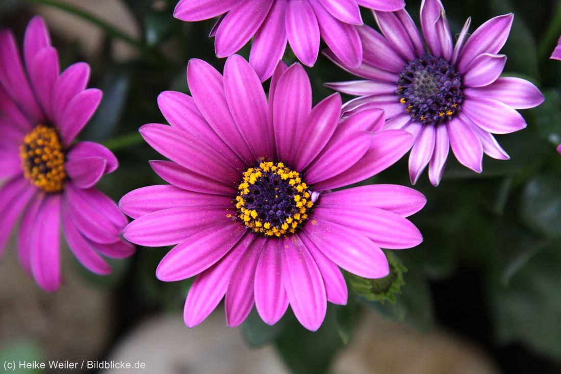 Blumen_IMG_9549