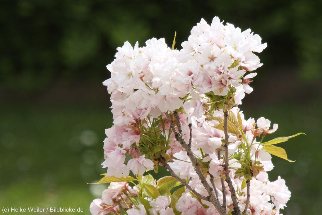 Blumen_IMG_9588