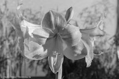 Blumen_IMG_2403