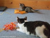 Kisha und Matou 2007 - DSCF0877