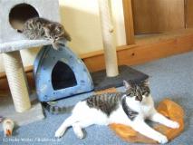 Kisha und Matou 2007 - DSCF0892