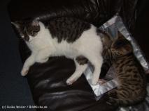 Kisha und Matou 2007 - DSCF1200