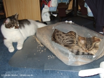 Kisha und Matou 2007 - DSCF1648