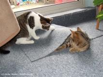 Kisha und Matou 2007 - DSCF1768