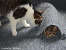 Kisha und Matou 2007 - DSCF1775