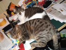 Kisha und Matou 2007 - DSCF1854