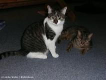 Kisha und Matou 2007 - P1050997-1