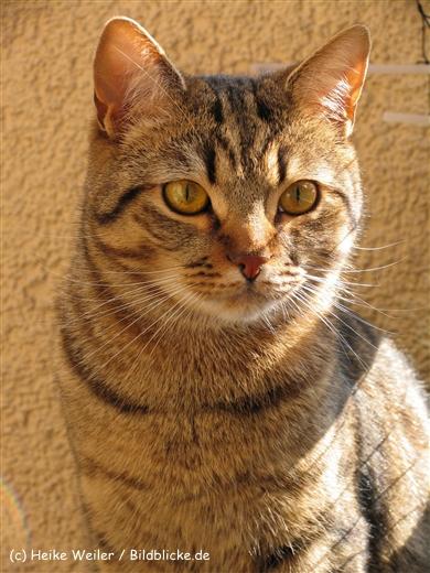 Katzen 2008 - 080507 053