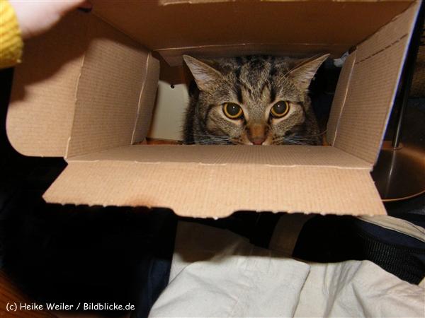 Katzen 2008 - 081010 081