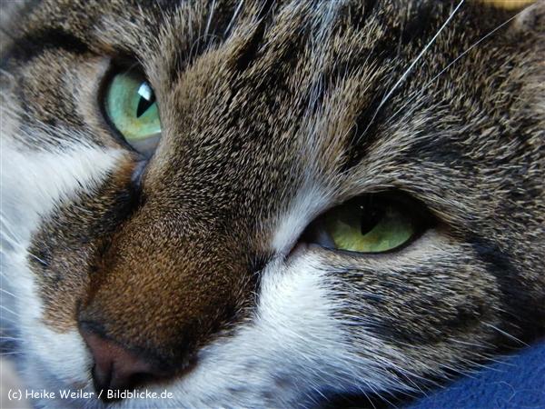 Katzen 2008 - 081010 140