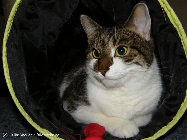 Katzen 2008 - 081010 237