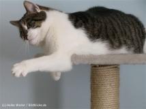 Katzen 2008 - 080308 014