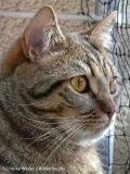Katzen 2008 - 080505 P1070849
