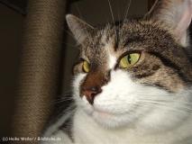 Katzen 2008 - 080726 DSCF3468