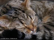 Katzen 2008 - 080808 226