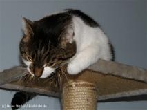 Katzen 2008 - 080812 232
