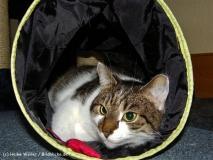 Katzen 2008 - 081010 233