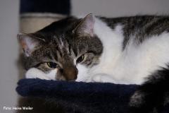 Katzen 2009 - 090326 IMG_0076