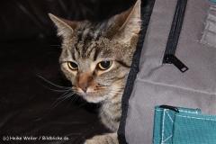 Katzen 2009 - 091203 IMG_8142