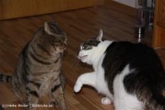 Katzen 2009 - 091227 IMG_8164