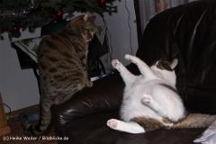 Katzen 2009 - 091230 IMG_8311