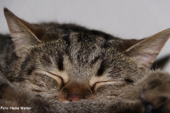Katzen 2009 - 090326 IMG_0037