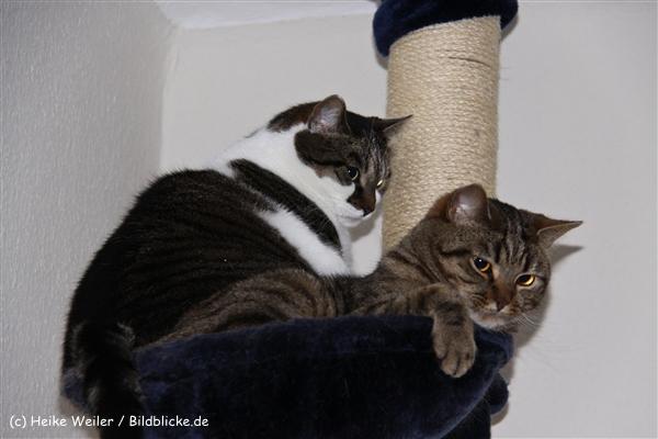 Katzen 2010 - 100510 IMG_1028-1