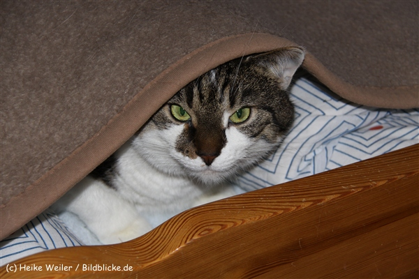 Katzen 2010 - 100512 IMG_1040