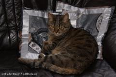 Katzen 2010 - 100516 IMG_1127