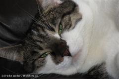 Katzen 2010 - 100529 IMG_0973