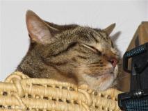 Katzen 2010 - 100804 IMG_1772