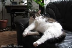 Katzen 2010 - 100808 IMG_1823
