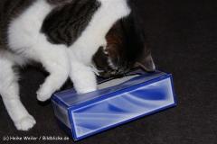 Katzen2011_IMG_1615