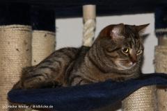 Katzen2011_IMG_1645