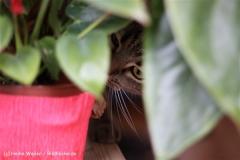 Katzen2011_IMG_2720