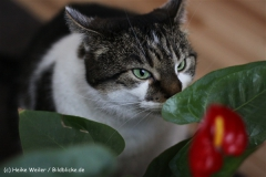 Katzen2011_IMG_2728