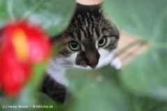 Katzen2011_IMG_2749