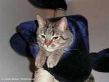 Katzen2011_P1180384