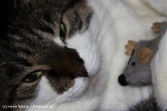 Katzen2011_IMG_1561