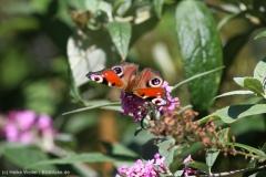 Insekten_IMG_9237