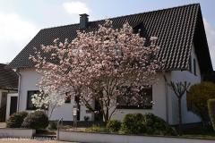Steinhuder_Meer_090416_IMG_0803_1