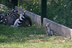 Tiergarten Bernburg 030710-IMG_5379