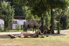 Tiergarten Bernburg 030710-IMG_5644