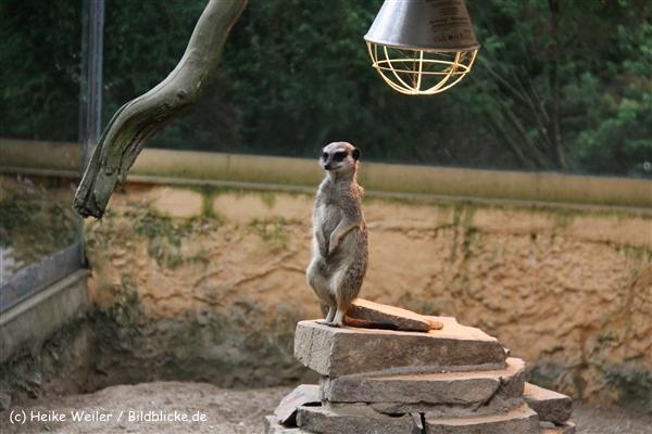 Tierpark Essehof 250610-IMG_4848