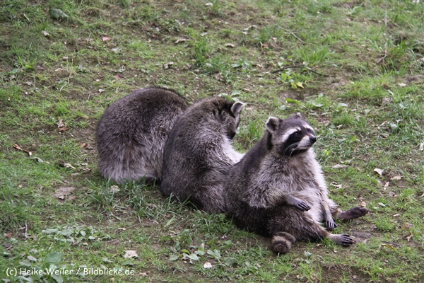 Tierpark Essehof 250610-IMG_4850