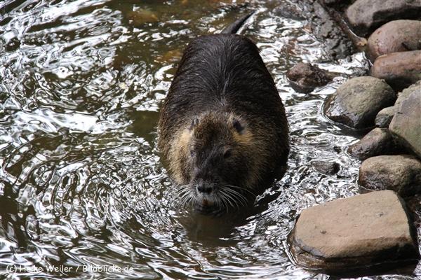 Tierpark Essehof 250610-IMG_4870