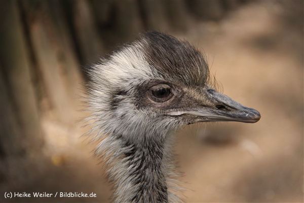 Tierpark Essehof 250610-IMG_4914