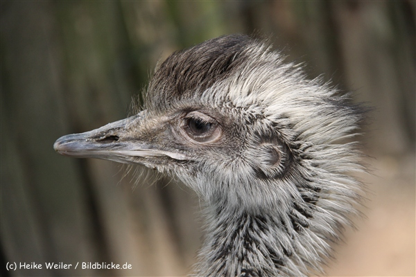 Tierpark Essehof 250610-IMG_4916