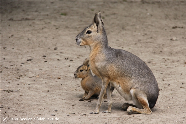 Tierpark Essehof 250610-IMG_4955