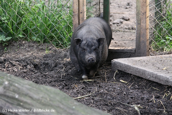 Tierpark Essehof 250610-IMG_5051-2